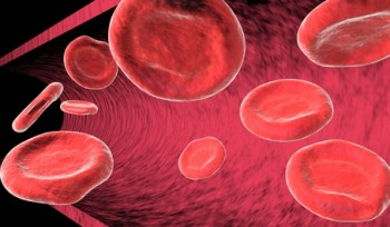 Circulación sanguínea: lecitina y colestero