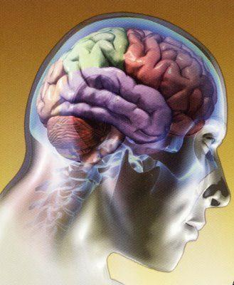 El Cerebro. Hipotálamo