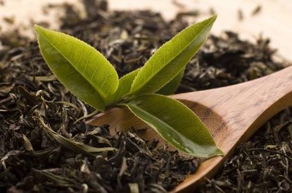 Te verde seco y Té fresco