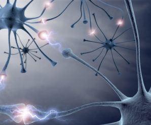 Neuronas. Drogas naturales para la felicidad
