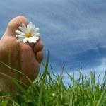 Gota: sus causas, remedios naturales y algo más…