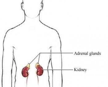 Glándulas suprarrenales: insuficiencia, tratamiento y salud
