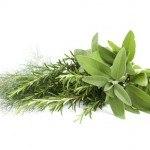 Aceite de Orégano: potente remedio contra Hongos, Levaduras, Infecciones y otras afecciones