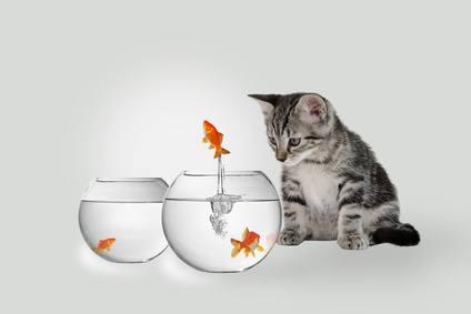 Gato casero con peces